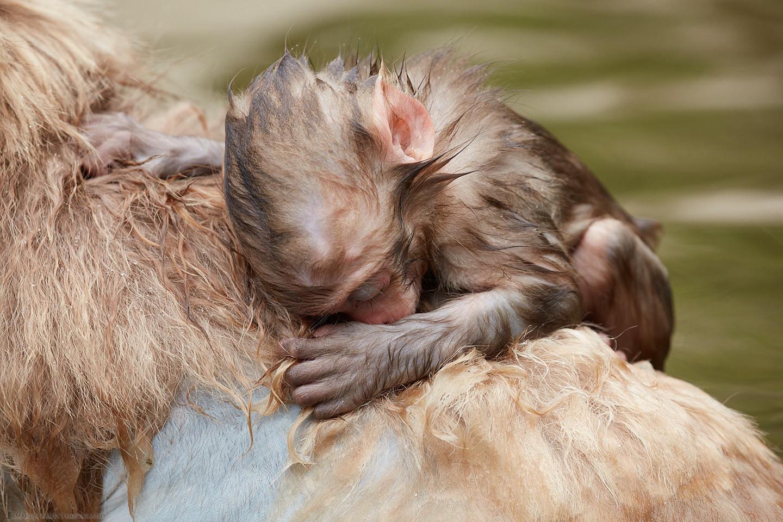 Sleeping on Mother's Back