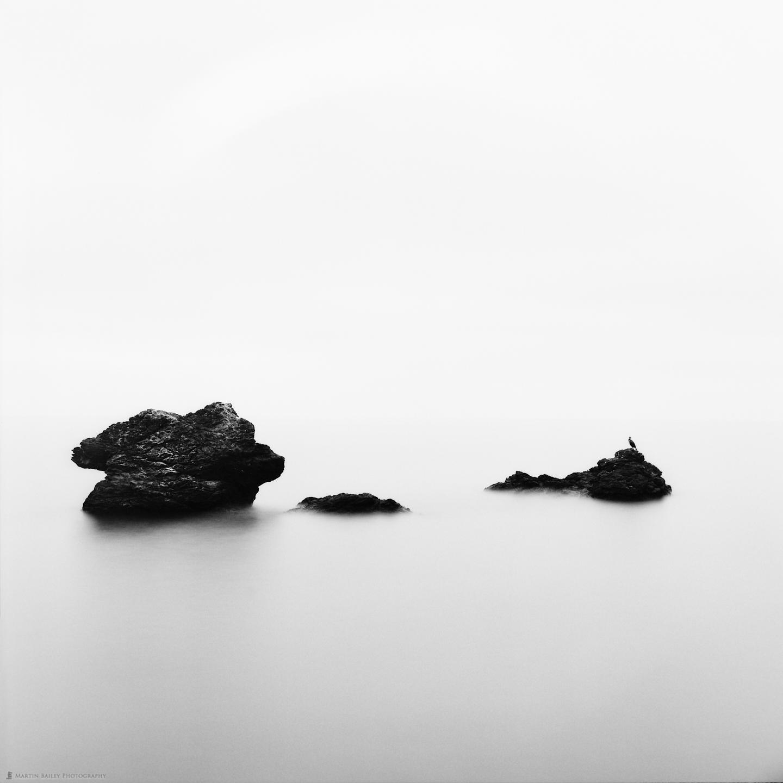 Sea Cormorant on Rocks