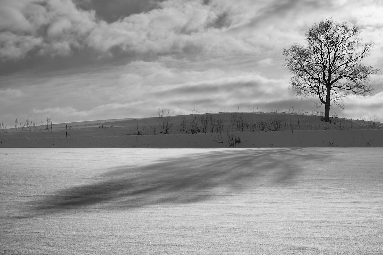 The Shadow of Martin's Tree