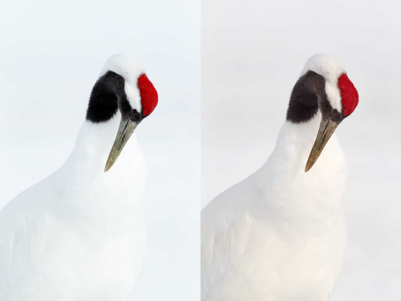 Red-Crowned Crane Shot Comparison