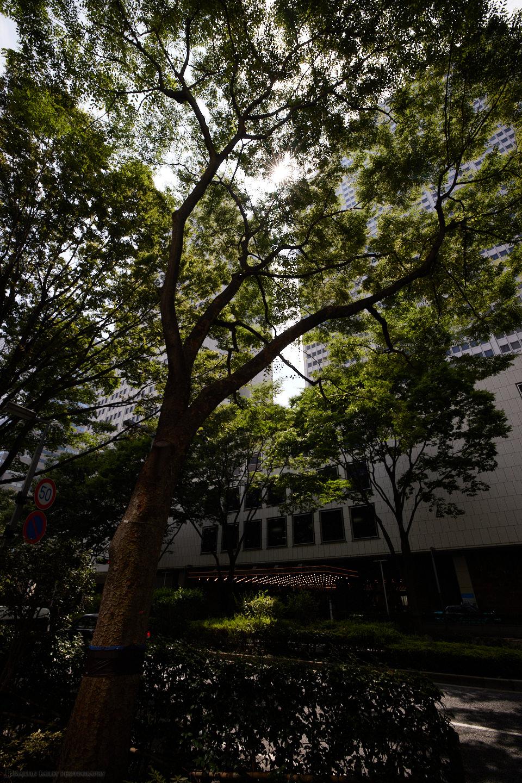 Sunlight Through Trees (Capture One Pro)