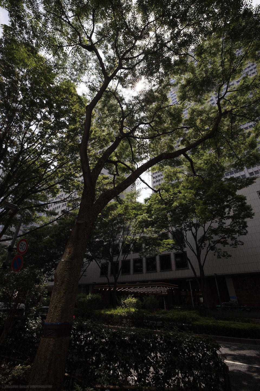 Sunlight Through Trees (DNG)