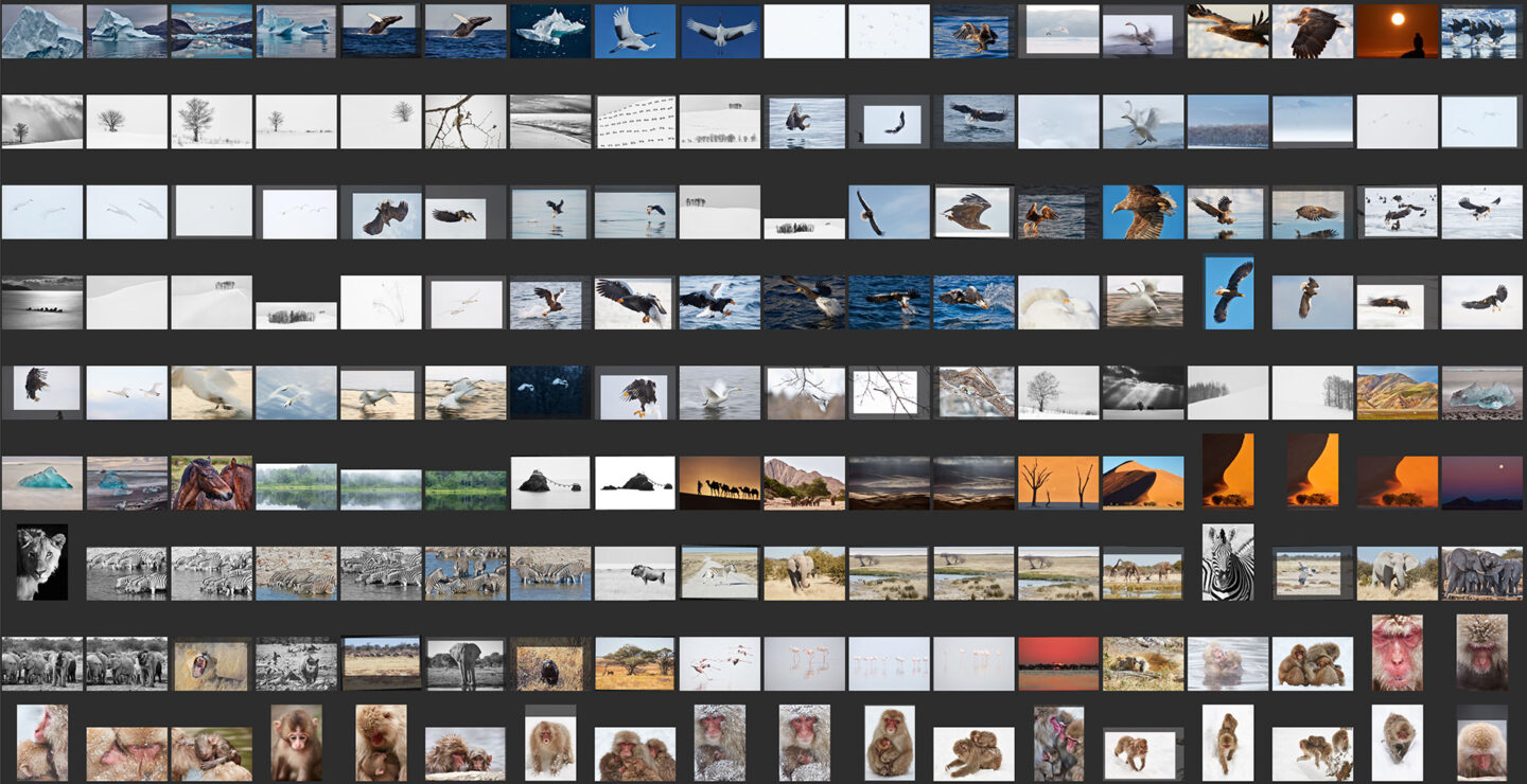 162 Images in First Selection from 100-400mm Lens
