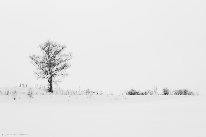 Bie Tree