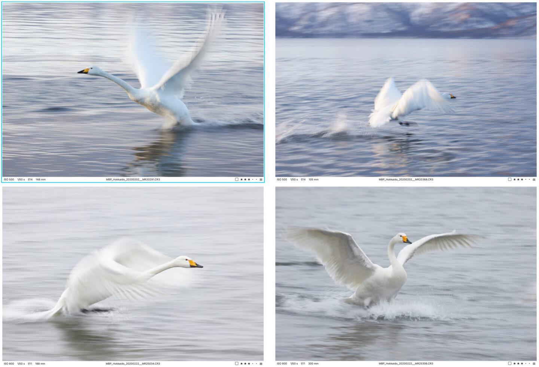 Final Four Swan Shots