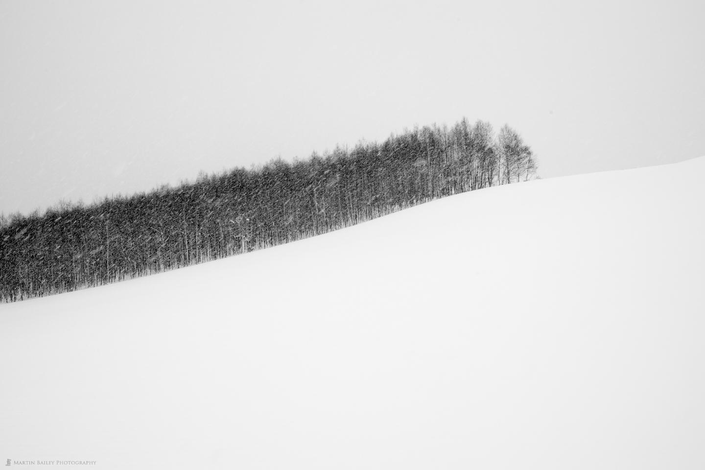 Copse in Snow
