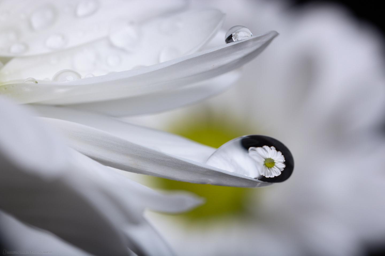 Flower in Droplet #6