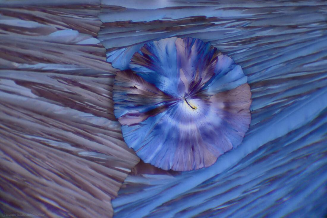 Alien Flower Head (Polarized Citric Acid Crystals 100X)