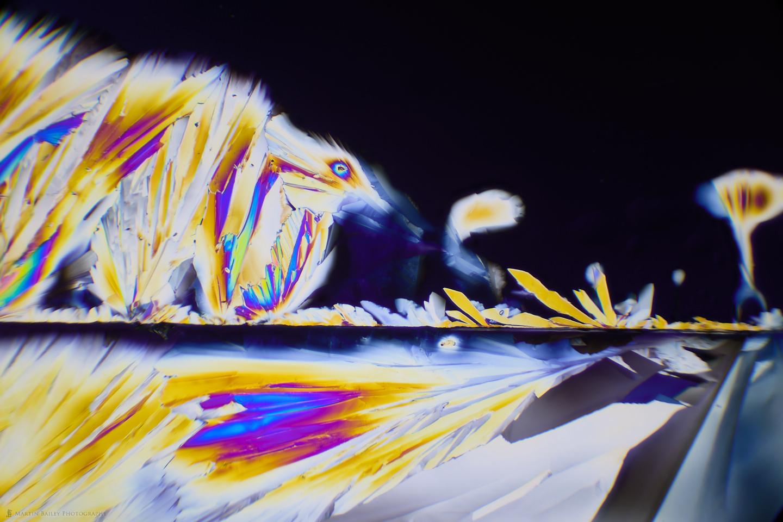 Foxy Alien (Polarized Citric Acid Crystals 40X)
