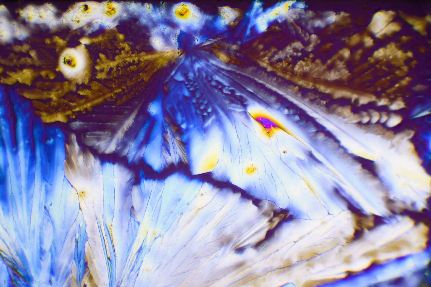 Feathered Crystals (Citric Acid Crystals 100X 14 Frames)