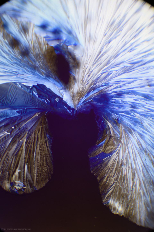 The Hunt (Citric Acid Crystals 40X 18 Frames)