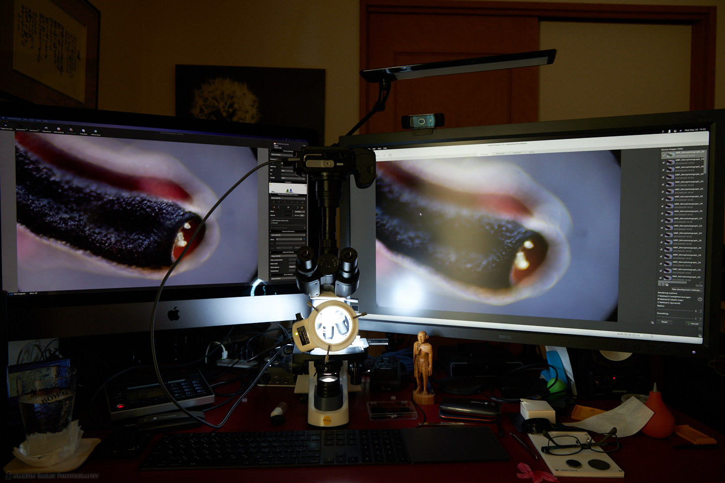 Using Ring Light for Additional Lighting in Darkfield Microphoto