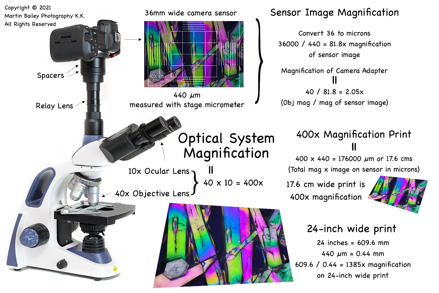 Microscope Magnification Observations