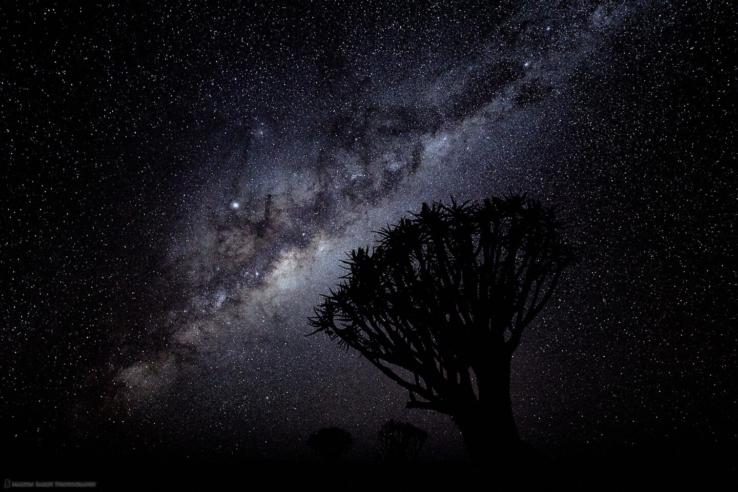 Original - Quiver Trees and Milky Way with Jupiter